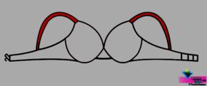 Straps-TextileStudent.com