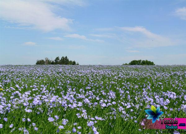 flax-Fiber-Field